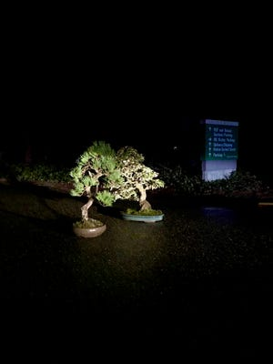 Two stolen bonsai trees were returned to Pacific Bonsai Museum on Tuesday night, less than 72 hours after they went missing, the museum says.