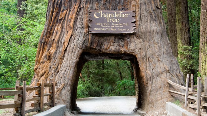 California redwood trees: 5 ways to see the massive trees