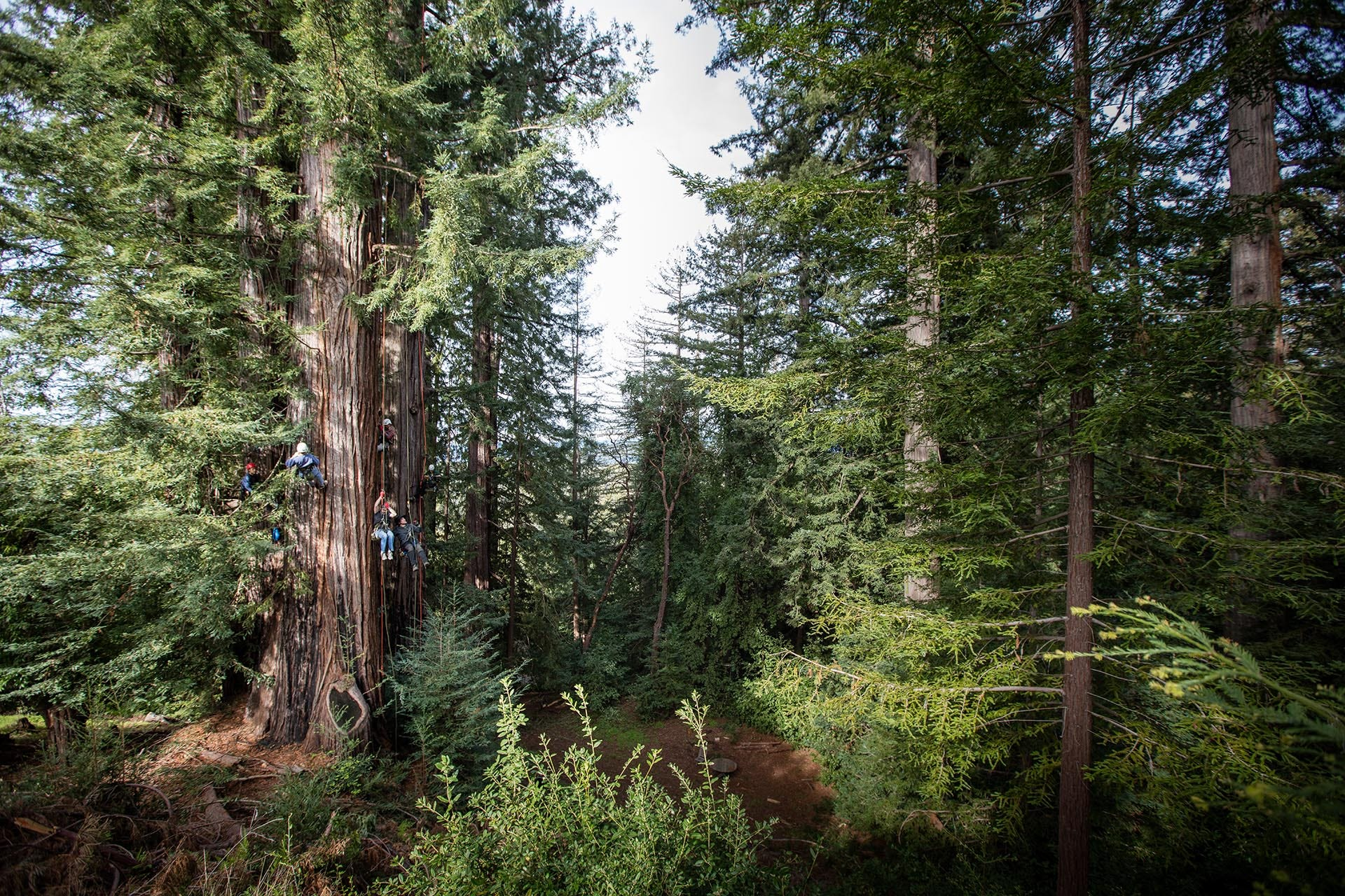 California redwood road trip: 5 memorable ways to experience the massive trees