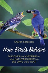 Sharon Sorenson's new book, How Birds Behave, is now available.