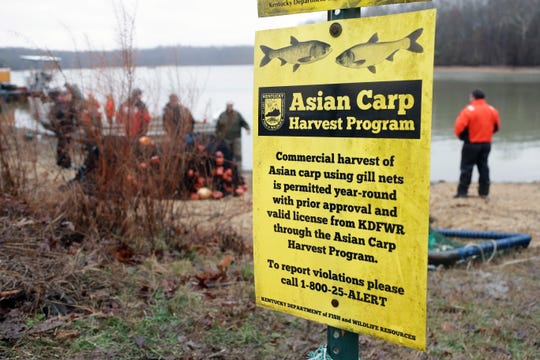 In this Feb. 5 photo, wildlife officials take part in a roundup of Asian carp in Smith Bay on Kentucky Lake near Golden Pond, Ky. (AP Photo/Mark Humphrey)