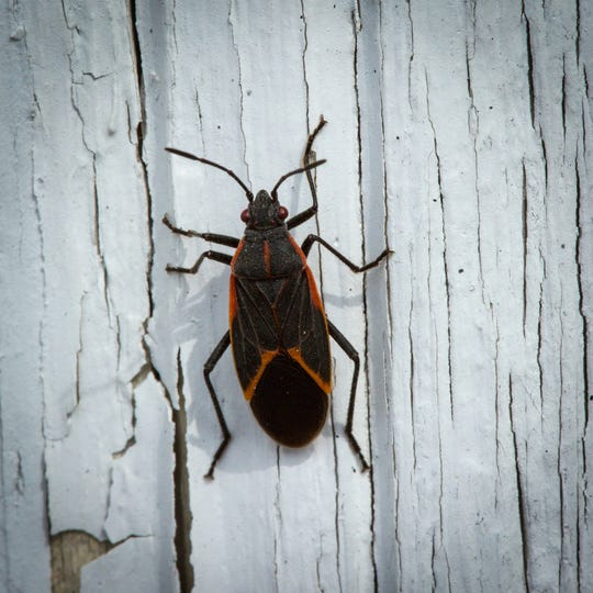 Many pests are underfoot seeking shelter from the cold, and your home may be the perfect spot.