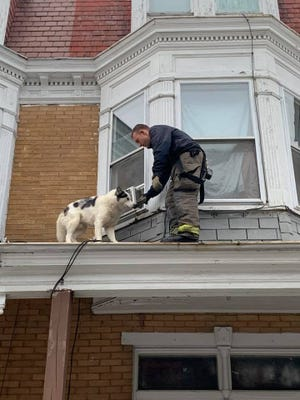 The York City Department of Fire/Rescue Services safety removed a dog from the roof of a house Wednesday night.