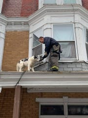 Slowly, but surely a dog came to a friendly firefighter trying to rescue him.