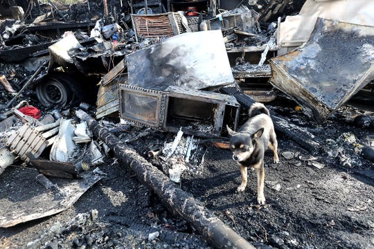 Gary Mantei's chihuahua, Bud, stands amid the debris of a burned-out camp trailer a day after a fire burned the Silver Streak trailer and a cab-over camper Wednesday night in the man's backyard off Henderson Road. A neighbor helped save both Mantei and Bud after the blaze broke out.