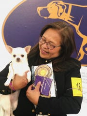 Josie Ornum holds her grand champion Chihuahua, Blondie, after winning a prize of merit in her category of smooth-coated Chihuahuas.