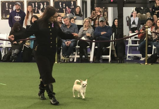 Josie Ornum shows off Blondie at the 2020 Westminster Dog Show.