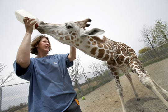 """Gretchen Crowe, a zookepper, bottle feeds a giraffe at Special Memories Zoo in Greenville in May 2014. The Animal Legal Defense Fund is suing the owners of the zoo, claiming animals are kept in """"squalid conditions"""" and lack basic necessities."""