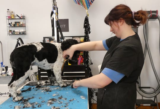 Emery Potts grooms a dog at Susan's Doggy Spa in Crestline.