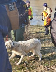 A dog was rescued from the flooded Ohio River near California by Cincinnati Police and Cincinnati Fire on Feb. 14, 2020.