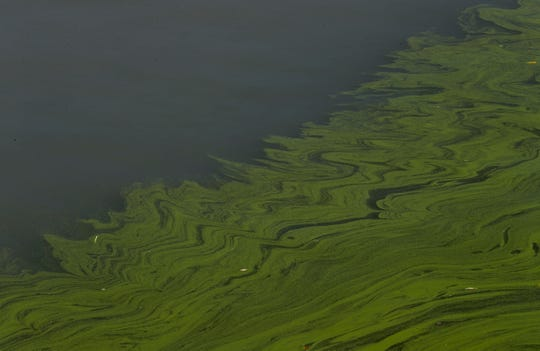 In this Sept. 15, 2017, file photo, algae floats on the surface of Lake Erie's Maumee Bay in Oregon, Ohio.
