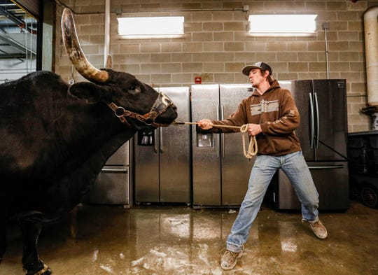 CINCH rodeo clown Nick Kaup pulls a bull to get washed at Bankers Life Fieldhouse, Indianapolis, Friday, Feb. 14, 2020. The Fieldhouse goes under a transformation preparing for CINCH World's Toughest Rodeo by pulling up the basketball court, laying down dirt and cattle shoots.