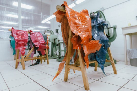 Ninety percent of alligator skins at American Tanning & Leather come from Louisiana.