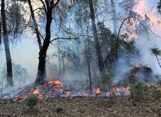 U.S. Forest Service officials set off a 90-acre control burn in the Silverthorn area of Lake Shasta on Thursday.