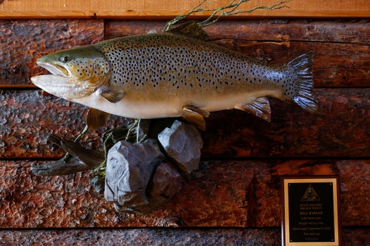 The 40-pound, 6-ounce brown trout that Bill Babler caught in Lake Taneycomo last year.