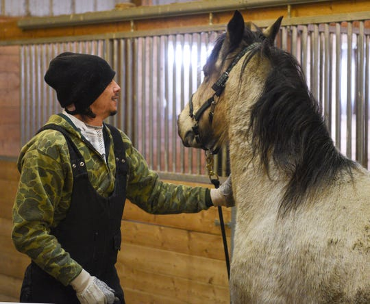 Anthony Bendjebar, 31, works with the horse Cowboy Friday, Feb. 14, 2020, at Angel Reins.