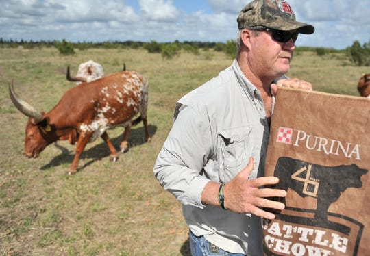 Rob Mace puts out cattle chow to attract his herd of Longhorn cattle in order to inspect them March 16, 2012, on land he leases in western Indian River County. The owner of the land has questioned the way the St. Johns Improvement District assesses fees on this property.