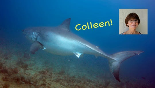 Meet great white shark Colleen, newly named by Viera scuba diver Jim Cocci after his wife of 37 years, Colleen Cocci.