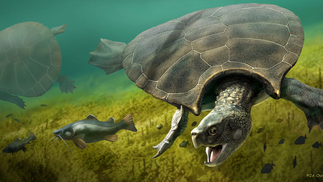 Giant, car-sized turtles once roamed South America, and scientists have the fossils to prove it - USA TODAY