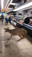 A deer was caught running through a Kroger in the Kroger in Boone Village Shopping Center in Zionsville on Saturday, Feb. 16, 2020. No one was injured and the deer eventually left the store.