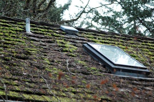 Moss is inevitable in the Pacific Northwest, where seasonal rain keeps it flourishing.