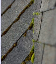 Moss on rooftops can lead to roof deterioration.