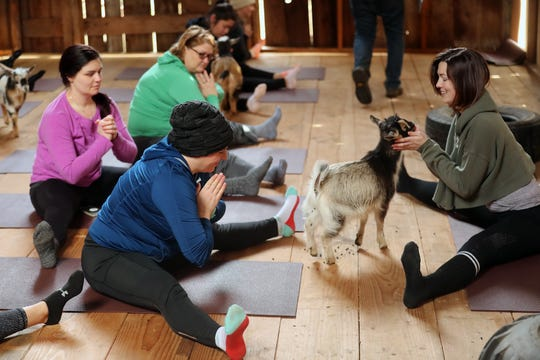 Yoga instructor Amanda Turk, right, greets a goat as the warms up during Kitsap Goat Yoga at The Smithshyre in Poulsbo on Sunday.