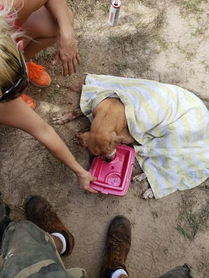 A dog  found shot in the head Saturday in Lehigh Acres was taken by Lee County Domestic Animal Services and later died at an area veterinary clinic.
