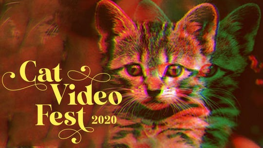 Cornell Cinema will present the 2020 edition of the annual 'Cat Video Fest.'