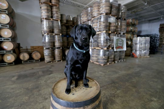 John Gill, who owns The Barrel Broker, brings his guard dog Cali, a 2-year-old Black Lab, to the Menomonee Falls warehouse with him each day.
