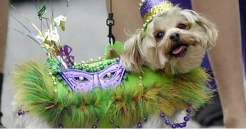 Celebrate Mardi Paw Celebration, Crawfish Boil & Adoption Day with the Humane Society of Lincoln County March 7.