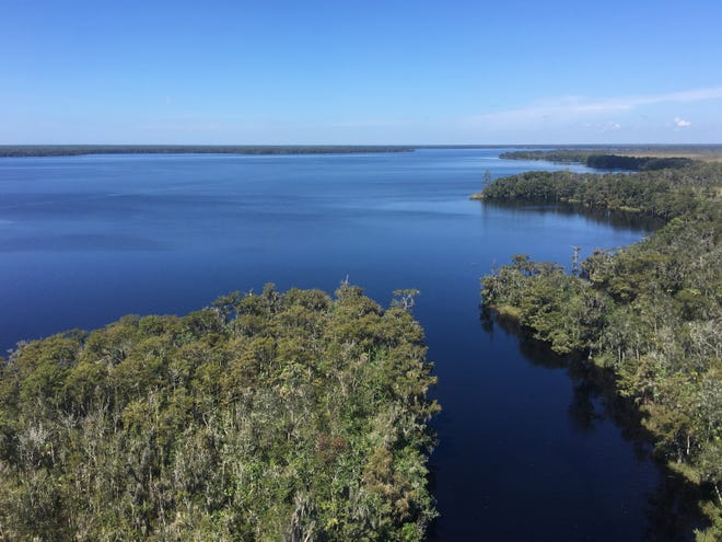 The safeguarding of Lake Wimico helps preserve and protect the water quality of the highly productive Apalachicola River, Apalachicola Bay and Gulf of Mexico.