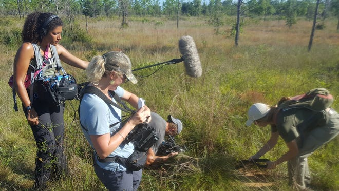 BBC crew onsite at the Nature Conservancy's Apalachicola Bluffs And Ravines Preserve with an Eastern Indigo Snake.