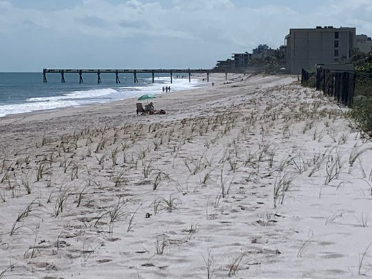 Recently restored dunes south of Indian River County's Tracking Station Park are shown Feb. 17, 2020. Salt-tolerant plants recently were installed in the dune.