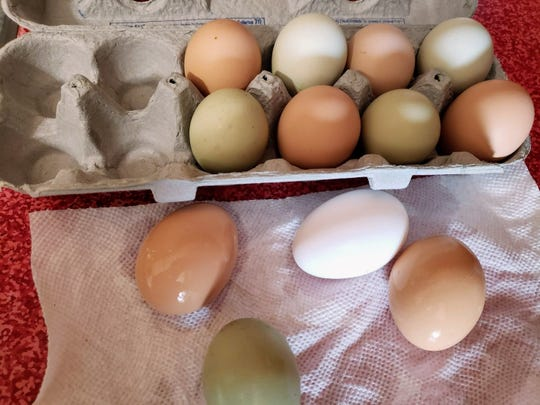 Susan's 'pet' hens produce a colorful array of fresh eggs.