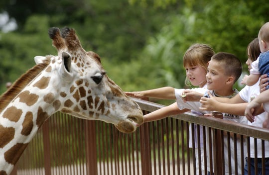 Children pet a Kizzie, a reticulated giraffe, at the Mesker Park Zoo & Botanical Garden on March 1, 2009. Kizzie, 19, died unexpectedly Tuesday.