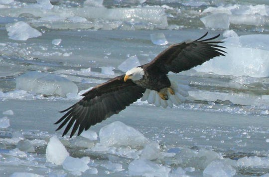 Prairie du Chien celebrates Bald Eagle Appreciations Days Feb. 28-29.