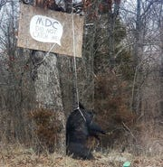 A dead feral hog strung from a tree near Boss, Missouri, included a message to the conservation department.