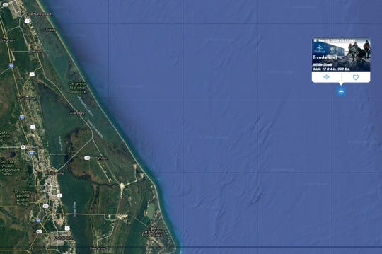Ironbound, a great white shark, pinged at 10:15 a.m. Feb. 18, 2020, off the coast of Titusville. Ironbound is a 12-foot, 4-inch shark that weighs 998 pounds.