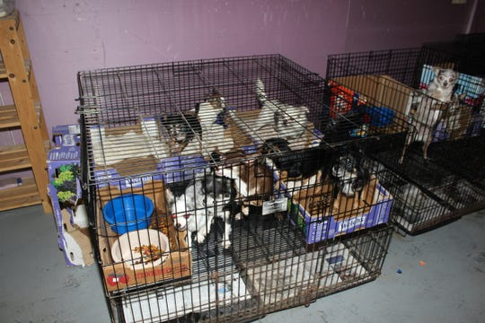 Some of the 130 dogs and cats rescued from an illegal puppy mill in Scotch Plains
