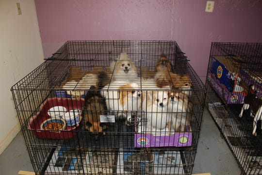 The animals have been transferred to more than a dozen local animal shelters