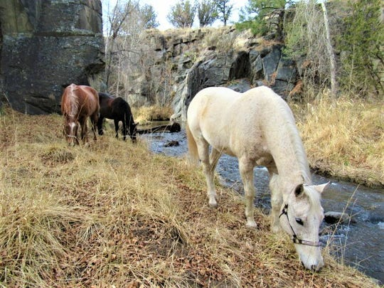 The Rio Bonito is a cool companion on a ride along the Fort Stanton Trail.