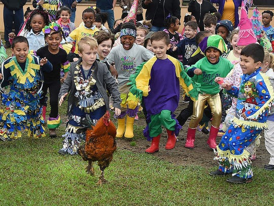 Park Vista Elementary was not a good place for poultry to be as the Pre-K students held their annual chicken run Wednesday on the school grounds. Substituting as Capitan for this year's Courir de Mardi Gras was Pre-K teacher Breanna Prudhomme. This year's courir was dedicated to Wade Berzas, Mamou resident and lone survivor of the December plane crash in Lafayette, La.