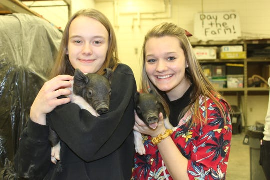 Brooke Schultz, left, and Hannah Loomans enjoy the piglets despite their loud squeals.