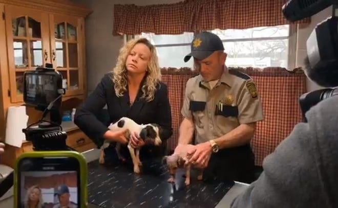 The Ashland County dog warden seized 46 dogs from 242 W. Main St. Wednesday. Ashland County Humane Society board president Rhonda Hofer said themajority of the dogs are underweight.