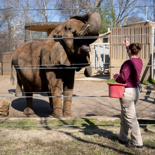Zoo keeper Caity Koser works with the elephants Wednesday, Feb. 19, 2020, at the Memphis Zoo.