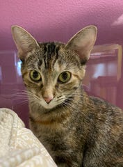 Gypsy wants to be adopted along with her sister, Ivy. They are at the Oshkosh Area Humane Society