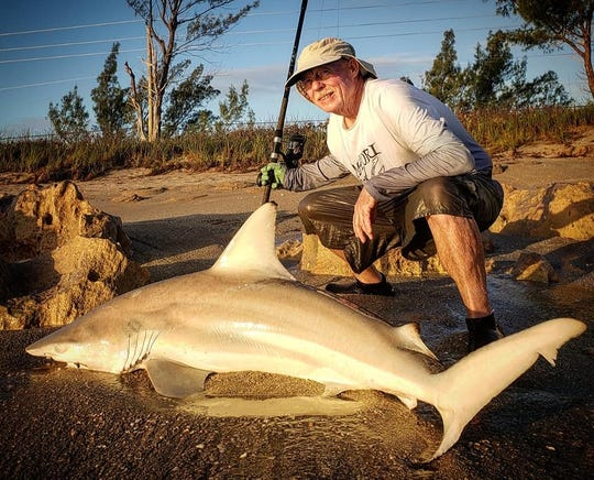 Shark fishing in the surf, especially for blacktip sharks and spinner sharks, is good right now.