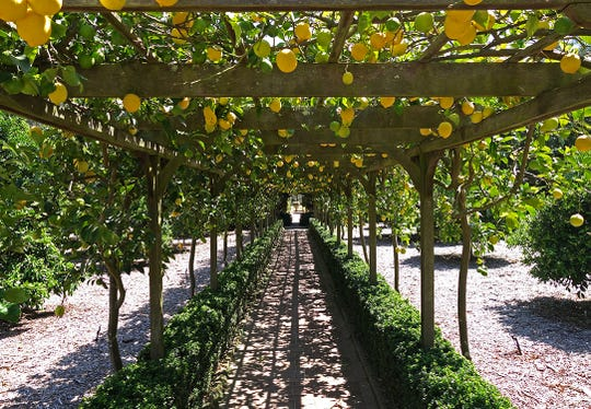 The lemon arbor at Ganna Walska Lotusland in Montecito is sure to inspire a few cocktail ideas during a garden-to-glass workshop offered as part of the Santa Barbara Culinary Experience.