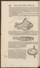 """""""Icones animalium"""" includes an image and description of sunfish on page 158."""